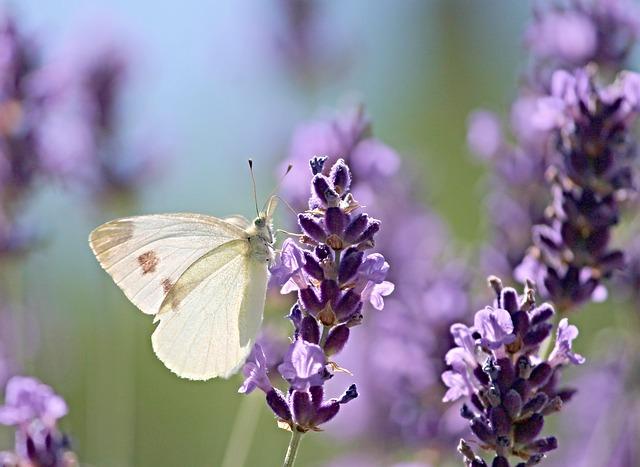 nieuw blog over de onbevangenheid van een vlinder. Hoe om te gaan met negatief nieuws.